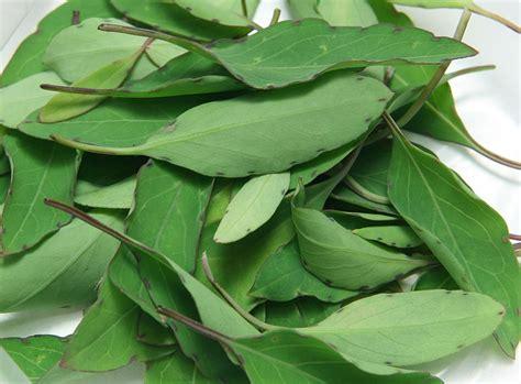 coriander cilantro cilantro substitutes