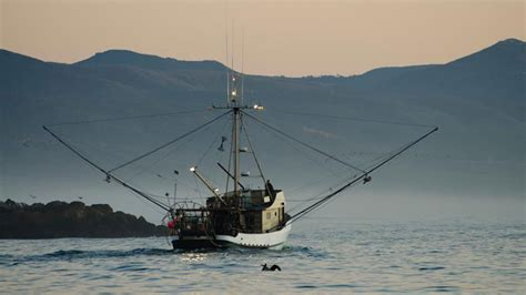 commercial fishing boat jobs uk marine reserves could help make commercial fishing more