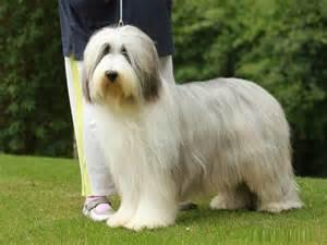 Hairy dog breeds names of dog breeds find dog breeds animal planet dog