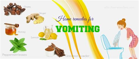 what can i give my for vomiting 28 home remedies for vomiting in adults