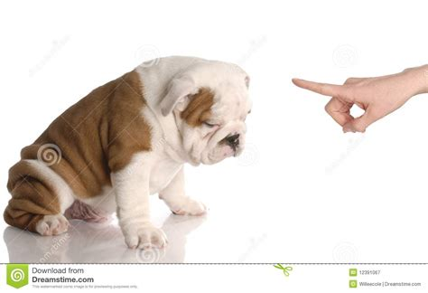 stinky puppy bad royalty free stock photography image 12391067