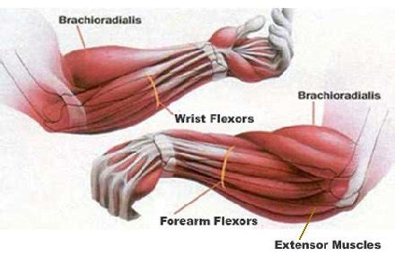 forearm bench fat forearm training athlete io formerly dangerouslyhardcore com