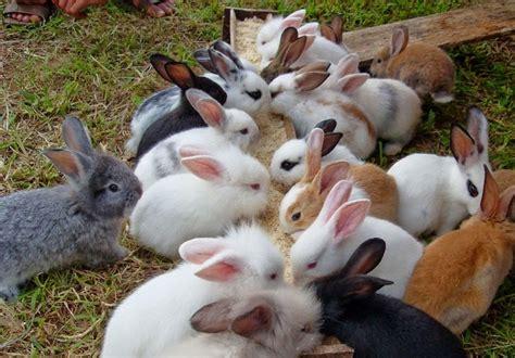 Harga Dompet Merk Forenzi sisir untuk kelinci jual sisir kutu caplak untuk kucing
