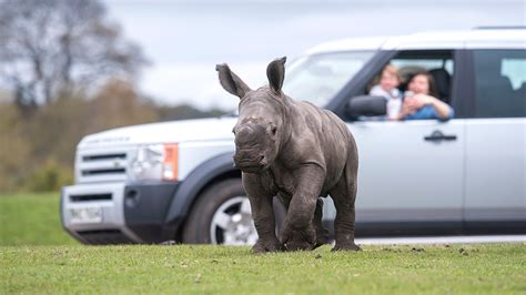 printable vouchers for west midlands safari park wyre forest places to go lets go with the children