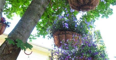 backyard love backyard gardens love it backyards click