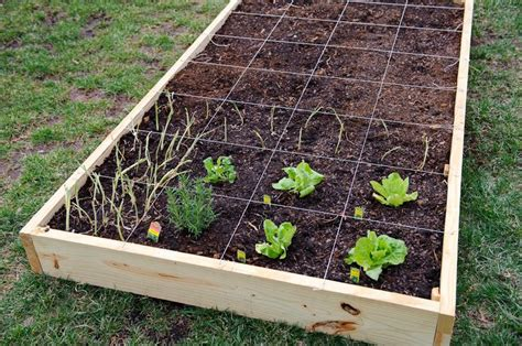 square vegetable garden 17 best images about diy fruits veggies on