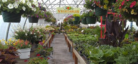 trendy idea vegetable gardening supplies imposing