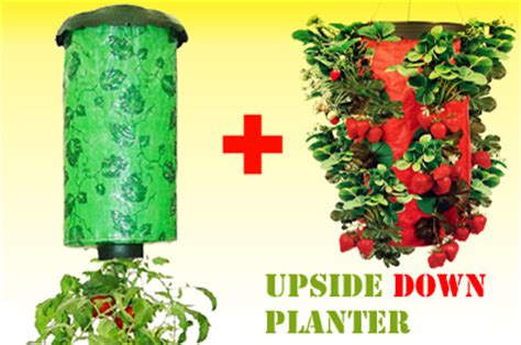 1 x upside down tomato planter 1 x upside down