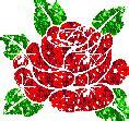 imagenes gif rosas rojas im 225 genes de rosas brillantes rosas rojas