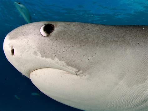 Baby Shark Eyes | sharks are color blind retina study suggests