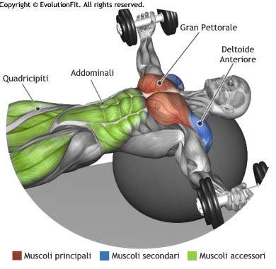 pettorali interni esercizi esercizi spalle posteriori con manubri wroc awski