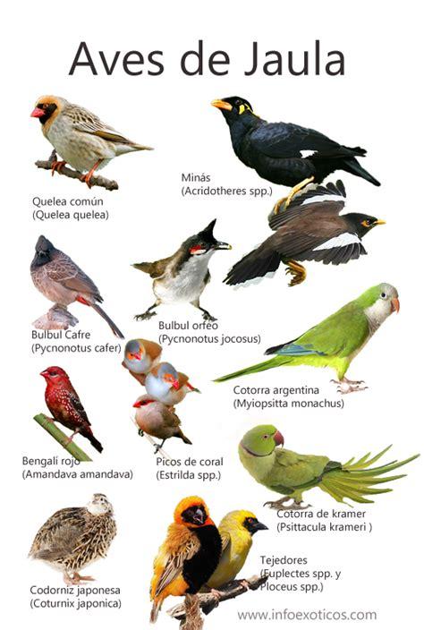 aves de europa 842821476x con imagenes de aves hilarious