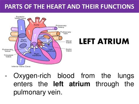 sections of library and their functions the parts of the heart and its functions gallery how to