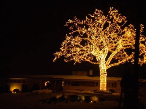 bloomington mn the big tree the owners light up every