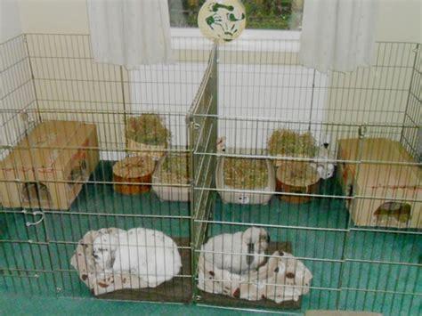 Bc Housing Floor Plans Rabbit Accommodation Housing Ideas For Bunny Rabbits