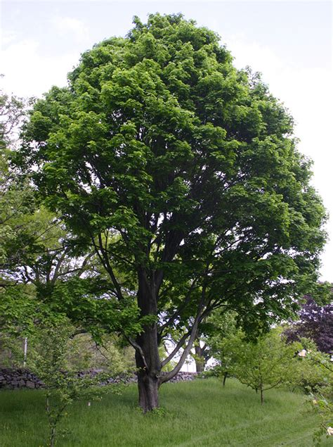 A Tree - ufei selectree a tree selection guide