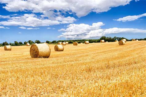 landwirtschaftliche immobilien lbv ulrich landwirtschaftliches beratungs und