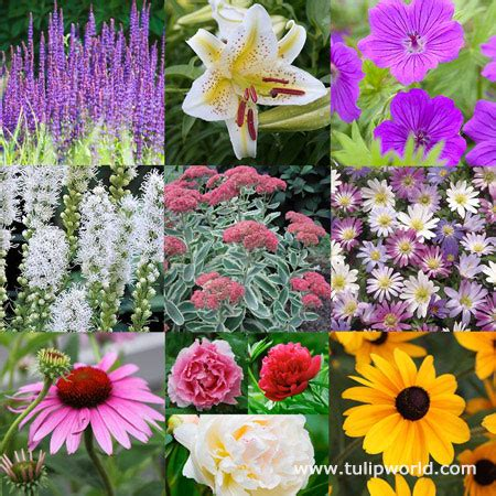 28 best perennials that bloom all season best flowers for all summer color lots of blooms