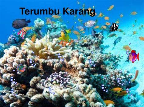 Batu Kerang Laut ekosistem pantai terumbu karang