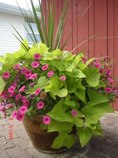 inexpensive container gardening 25 best ideas about potted plants on potted