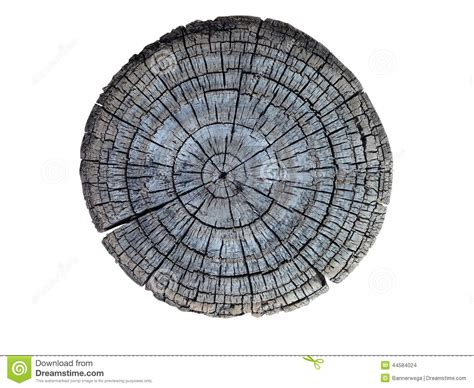 cross section tree cross section of tree trunk stock photo image 44584024