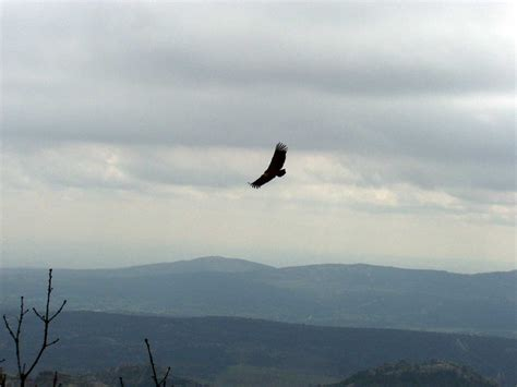 imagenes de brujas reales volando manuel matas p 225 gina 222 noguera de albarrac 237 n