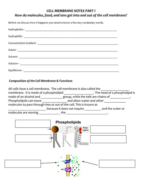 cell membrane coloring worksheet answers 16 best images of cell membrane worksheet answer key