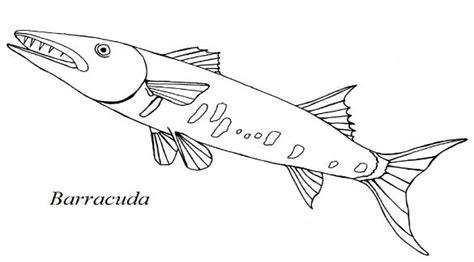 barracuda fish coloring page ladybug anatomy diagram ladybug free engine image for