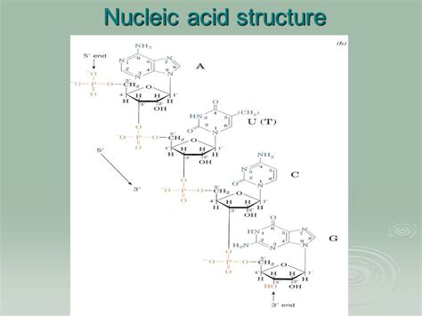 nucleic acid diagram an introduction to laplace transforms and fourier