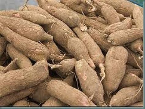 ediblr raw roots tapioca poisonous or deliciousness hubpages