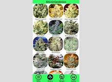 Marijuana Strain Guide APK Download - Free Medical APP for ... Leafly App