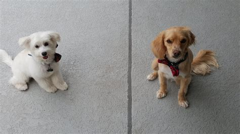 grooming places bark place grooming 126 billeder 131 anmeldelser hundeklipning 934 n