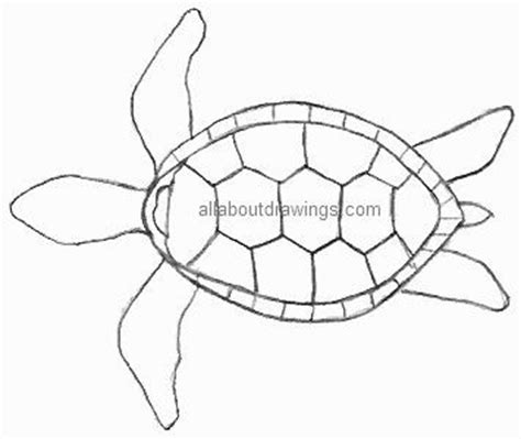 Turtle Outline by Turtle Outline Turtles Drawings Search And Turtles