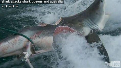 monster crocodile attacks fishing boat crocodile attacks shark when nature is badass shark