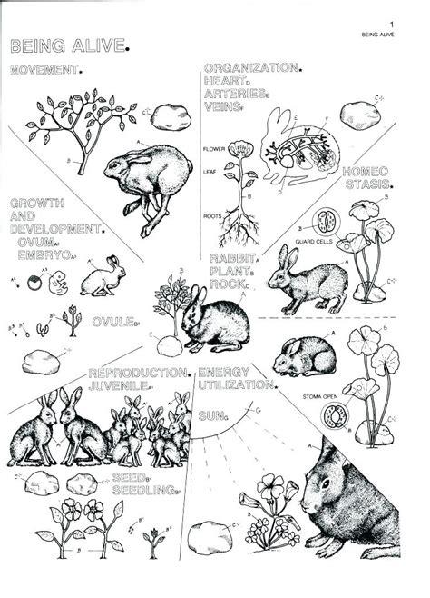 Marine Biology Drawings