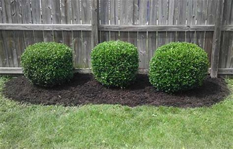 landscaping bushes for front of house shrubs for front of house