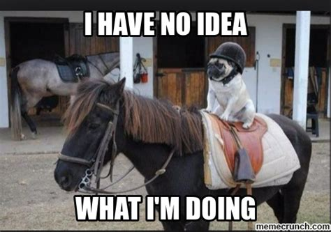 Pug Life Meme - pug life meme