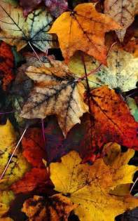 Fall Autumn 25 Best Ideas About Autumn Leaves On Pinterest Autumn