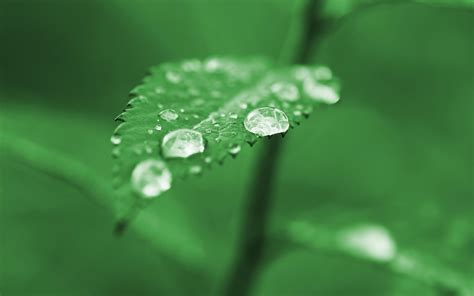 hd green nature leaves plants water drops dew  desktop background wallpaper