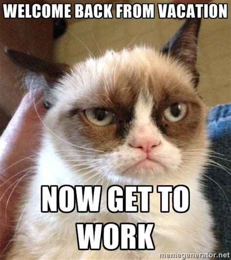 Welcome Back Meme - grumpy cat 2 welcome back color theory pinterest