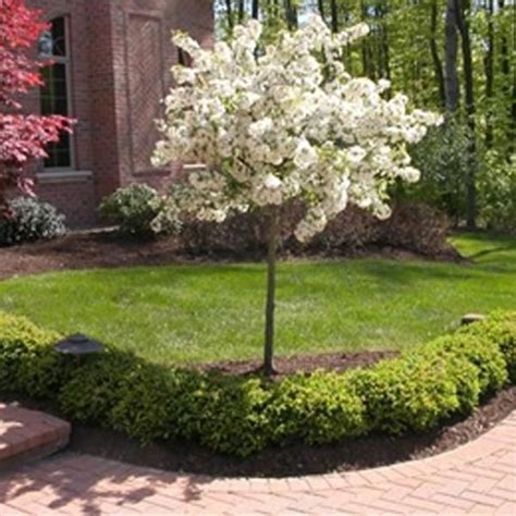 small backyard trees 35 best outside shrubs trees images on pinterest diy landscaping ideas landscaping ideas and