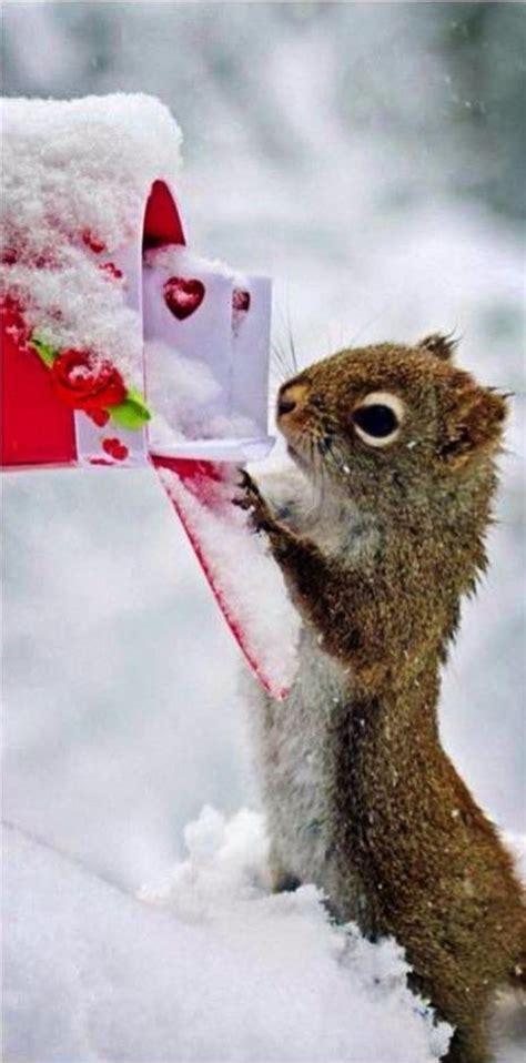 Tiere Im Winter Eichh Rnchen 4539 by 220 Ber 1 000 Ideen Zu Lustiges Eichh 246 Rnchen Auf