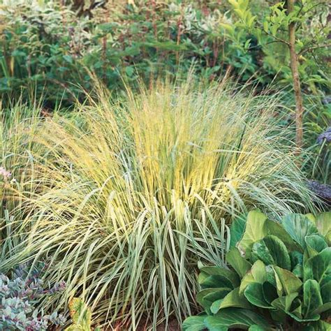 best grass for shade and drought decor references