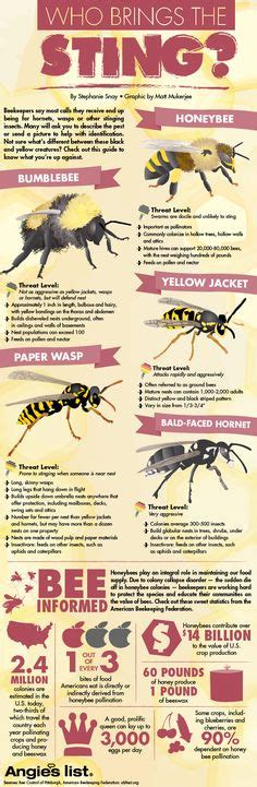 Bee Stinger Detox by How To Burn To Cleanse Homes Wand And Room