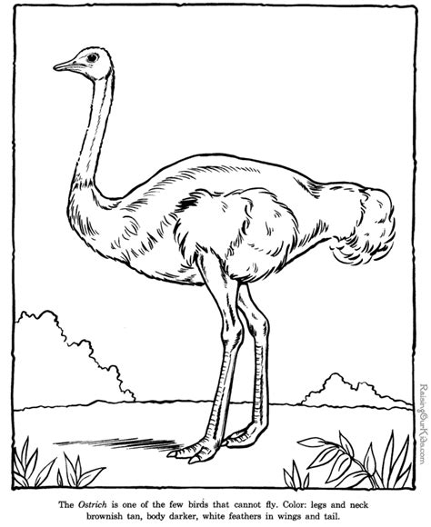 ostrich coloring pages zoo animals