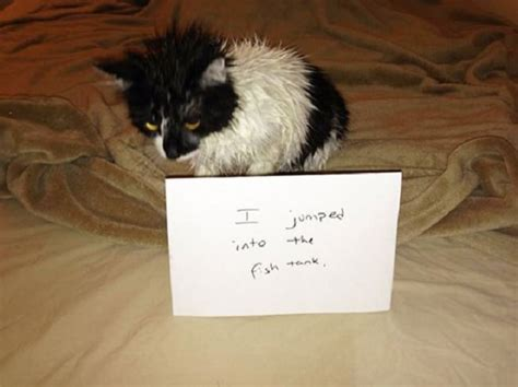 When Did Find Out Was Bad 17 Bad Cats You Ll Lol When You Find Out What They Did