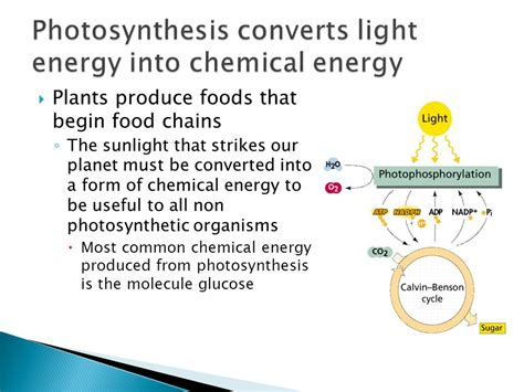 how is light energy converted into chemical energy during photosynthesis topic 3 8 photosynthesis ppt