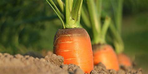 starting your own vegetable garden the best taste of all starting your own vegetable garden