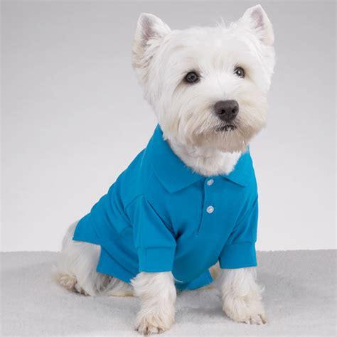preppy puppy preppy puppy polo cape blue baxterboo