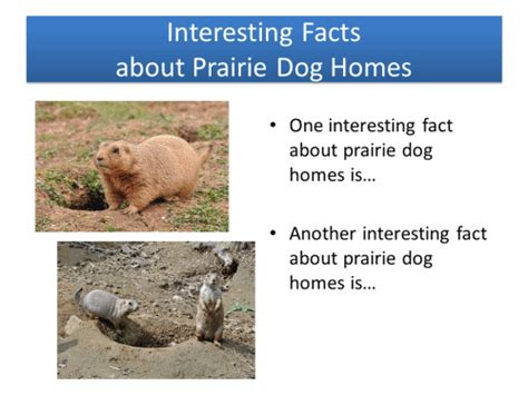 prairie facts animal homes prairie dogs powerpoint activity k 5 computer lab technology lesson plans